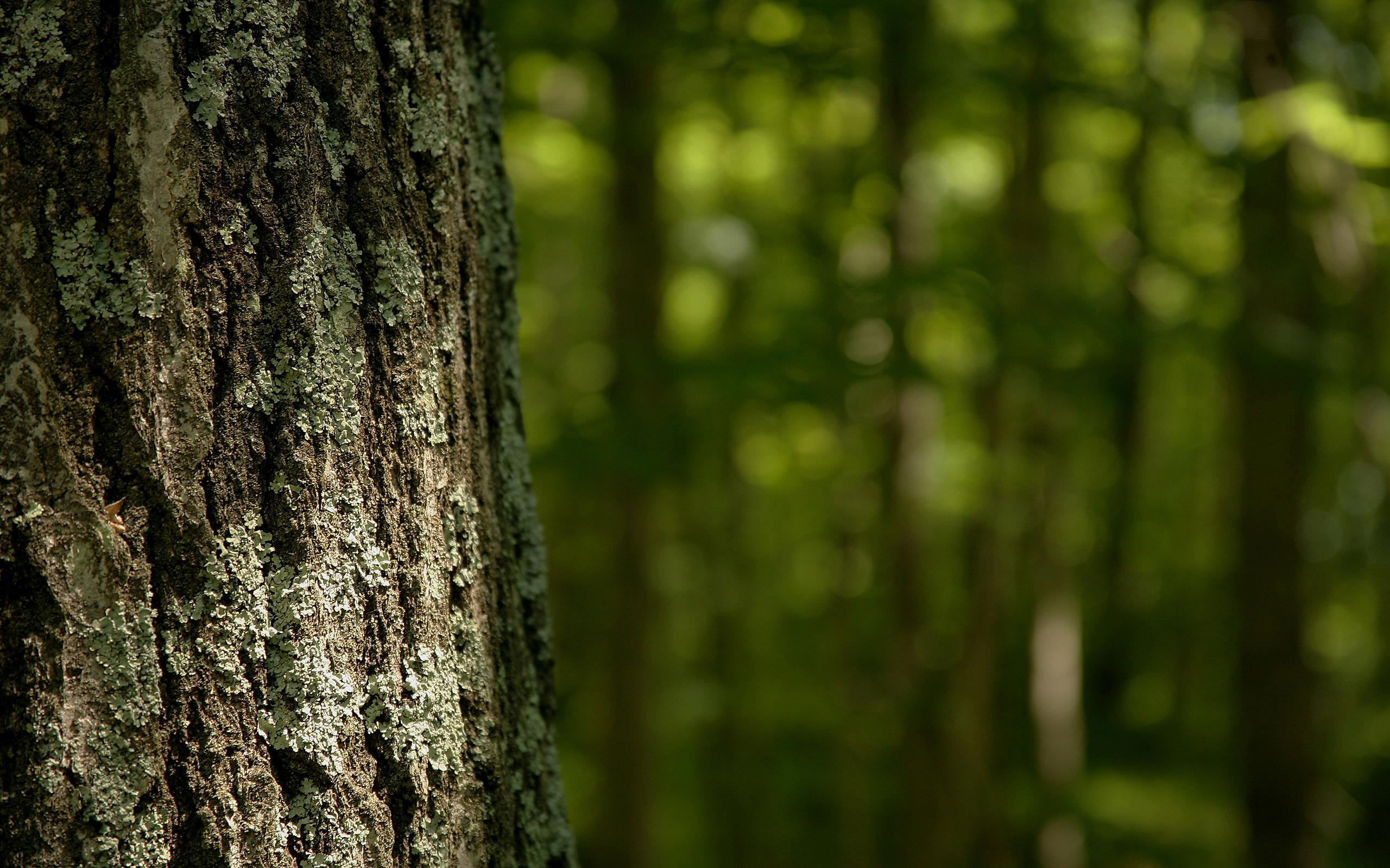 Bitja gozdov, ki jih ne poznamo – vilinski svet